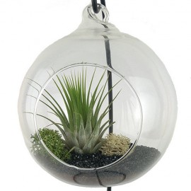 Terrario plantas aire forja