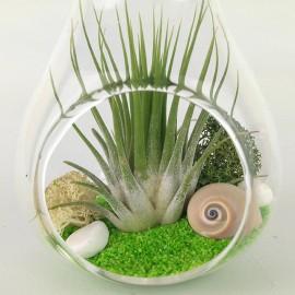 Terrario clavel aire pera