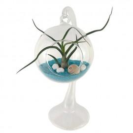 Terrario planta aire soporte cristal
