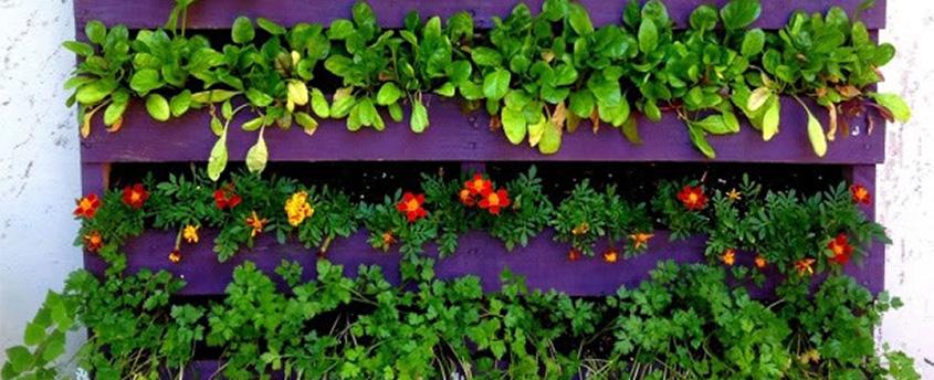 Como hacer un jard n vertical con palets - Jardines verticales paso a paso ...